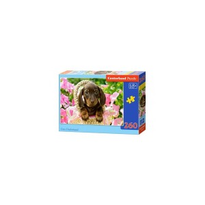 Puzzle Castorland - Cute Dachshund, 260 piese